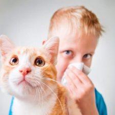 Аллергия на кошек у детей: способы борьбы с симптомами